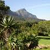 Kirstenbosch National Botanical Gardens close to Constantia